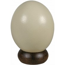 Genuine ostrich egg OSEGG001