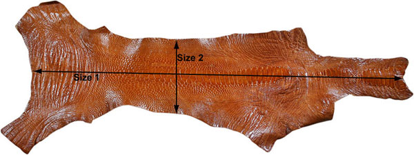 Real ostrich leg skin dimensions measuring